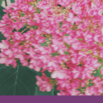 *Blooming Mom 長野*ツキイチ☆交流会|7月